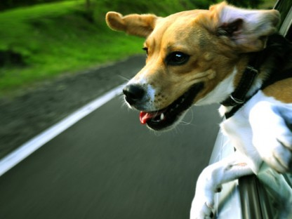 What Kind of Car is Ideal for Your Dog?