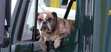 Driving with an Unsecured Dog and Other Road Rules You Could Be Breaking